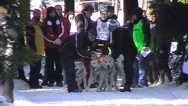 Závody psích spřežení Červenovodské sedlo, Buková hora, Bystřec 2010